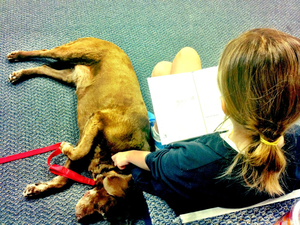 Who Let the Dog....In? 7 Lessons Learned From Bringing My Dog to School. (5/6)