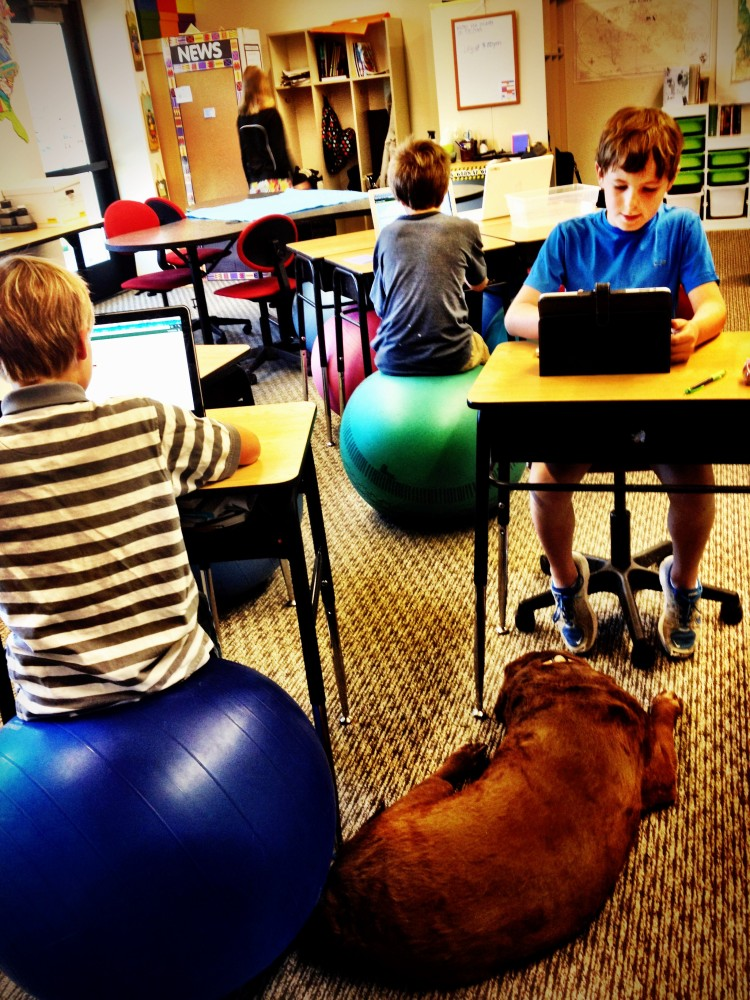 Who Let the Dog....In? 7 Lessons Learned From Bringing My Dog to School. (3/6)